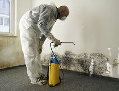 Mold Symptoms and Their Health Dangers   Lifeworks Wellness Center