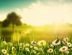 Field of flowes in the sun. We offer successful IV treatment that help our patients recover from chronic diseases