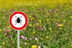 A field of flowers with a tick danger sign