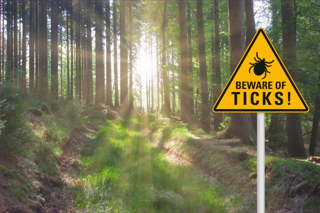Image of a woods with a tick danger sign