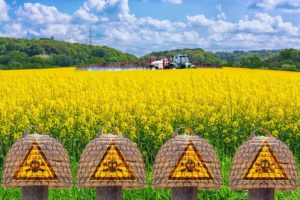 Farmer on the tractor spraying yellow Rabsfeld with pesticide