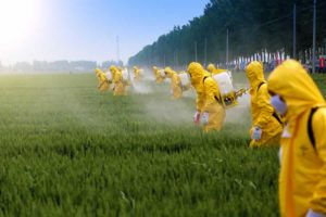 Workers using pesticides. We offer body detox therapies.