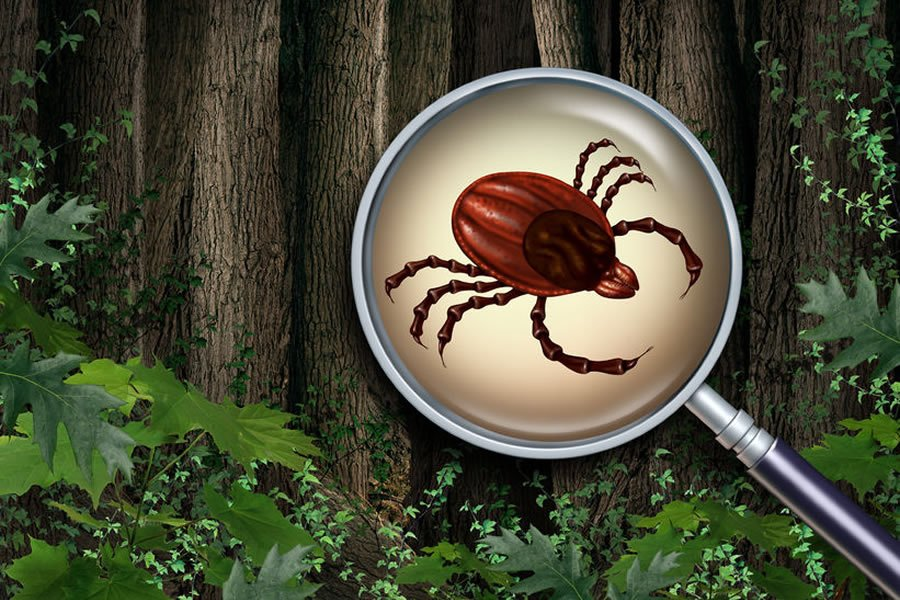 Fixed My Lyme Misdiagnosis